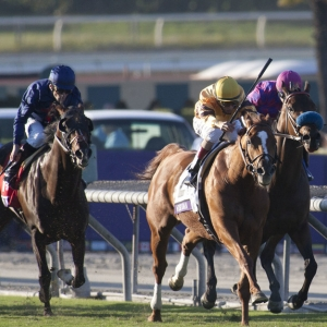 ncaa odds picks breeders cup 2015 picks