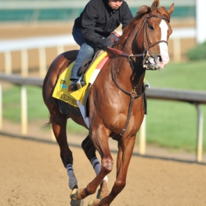 Shackleford, Preakness Stakes Winner