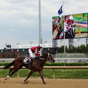 Untapable, race horse