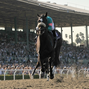 How do i place a bet on the preakness professional horse betting advice soccer