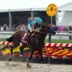 American Pharoah, racehorse