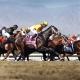 Beholder, racehorse