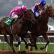 Firing Line, horse racing