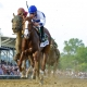 Shackleford, the 2011 Preakness Stakes winner